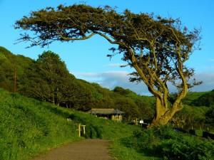 Bir Ağaç, Ama Nasıl Bir Ağaç, Olurdunuz? - Esin Nur Akyıldız