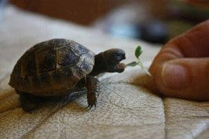Evini Kendine Şapka Yapan Bir Kaplumbağa Gördünüz Mü Hiç? - Esin Nur Akyıldız
