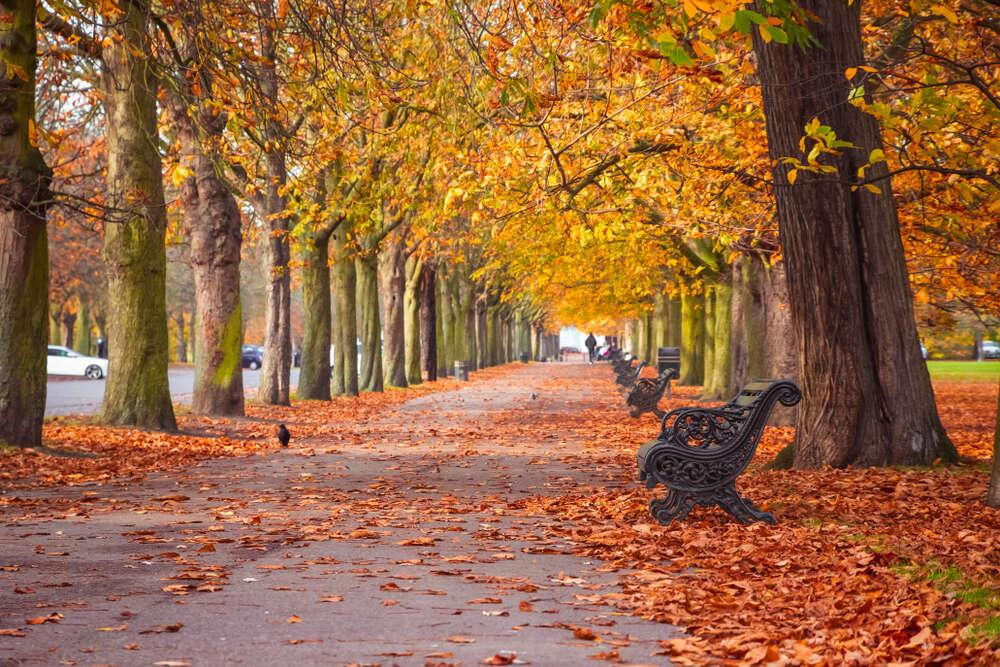 Sonbahar Depresyonu Ayhan Altaş - Sonbahar Depresyonu